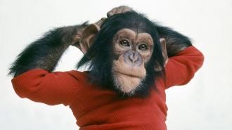кто родился под знаком весов в год обезьяны