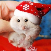cute_animals_dressed_for_christmas_25.jpg